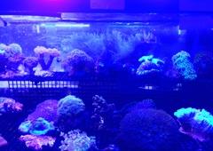 The Barrier Reef - Boca Raton, FL