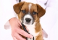 Fountain Creek Veterinary Clinic LLC - Fountain, CO