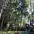 Tomahawk Tree Service