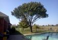 Express Tree Trimming - Dallas, TX
