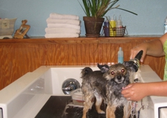 Barkleys do it yourself dog wash professional groom spa 524 barkleys do it yourself dog wash professional groom spa north palm beach solutioingenieria Image collections