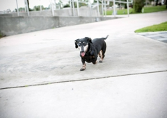 Lake Jesup Animal Hospital - Winter Springs, FL. ...and run around the park without a care in the world!