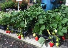 Garden Gate Nursery   Gainesville, FL