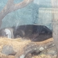 Aquarium of The Bay - San Francisco, CA. One of the otters catching some zzzzzzzs!