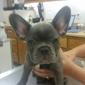 ABC Veterinary Hospitals - San Diego, CA
