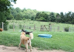 Liberty Hill Pet Resort, Inc. - Bealeton, VA