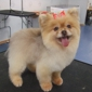 Miami Doggy Style, Pet Grooming Salon and Day Care - Miami, FL