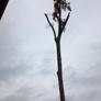 Advance Tree Care - Clinton, MS