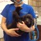Veterinary Medical Center Of Turlock - Turlock, CA