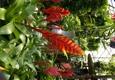 Oakdale Greenhouses, LLC - Charlotte, NC