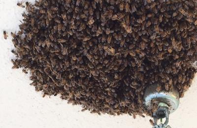 A Bee Man - Agoura Hills, CA
