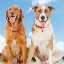 Doggie District Pet Resort & Training Center