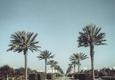 The Turf Tailors - Destin, FL