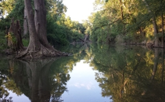 Alamo River RV Ranch And Campground