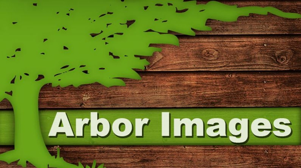 arbor images