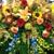 Apple Annies Garden Gates Floral & Gift Shop