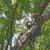 Omni Tree Service, Inc.