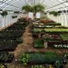Chamberlain Acres Garden Center & Florist