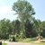 Berra Tree Experts