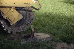 Affordable Carolina Tree Service stump grinding