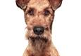 Romp Pet Care - Philadelphia, PA