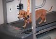 Central Texas Veterinary Specialty & Emergency Hospital - Round Rock, TX