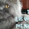 The Las Vegas Pet Nanny