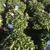 NJ Plants and Trees LLC.