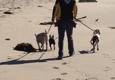 C.O.R.E. Dog Training and Boarding - Los Angeles, CA