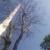 Pro Tree Services
