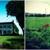 Reid Sod Farm