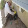 Blue Ribbon Pest Services, LLC