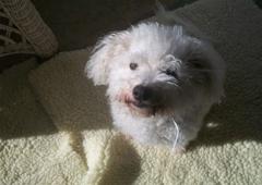 Best Friends Pet Care - Fairfax, VA