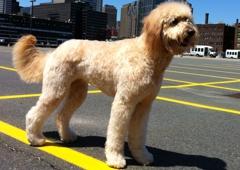 Dewberry Dogs - Boston, MA