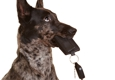 LEADING the PACK®  Professional Dog Training - Henderson, NV