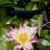 Devereux Gardens - Growing Center