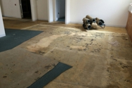 Bryn Mawr carpet removal After