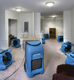 Economy Carpet Cleaning - Miami, FL