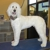 The Pampered Pet Grooming and Spa