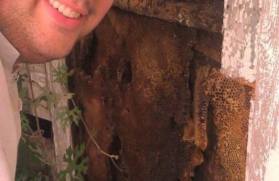 Biz-zz Bee Farms Pest Control - San Antonio, TX