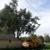 Madison County Tree Service