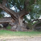 Wild Bill's Tree Service Inc