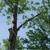 Arbor-Pro Tree Svce Inc