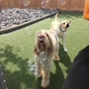 A Dog's Best Friend Doggy Daycare- East