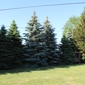 Extreme Tree Service - Swanton, OH. Before