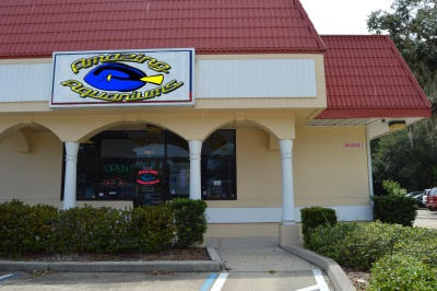 Amazing Aquariums 2330 S Nova Rd Daytona Beach Fl 32119 Closed Yp