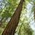 Rod's Tree Service
