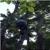 Arbor Tree Experts Inc