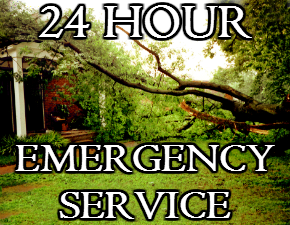 Emergency Tree Service in Asheville