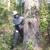 Audubon Land Clearing